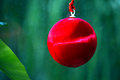 Christmas ball tree decoration red from against green background Stock Photos