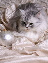 Christmas balls and cat Stock Image