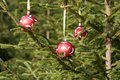 Christmas balls on a fir Stock Images