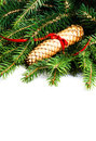 Christmas border with fir tree branch and christmas decoration i isolated on white background evergreen cone red Stock Image