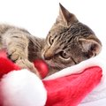 Christmas cat kitty plying with decorations Royalty Free Stock Photos