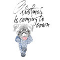Christmas is coming to town. Handdrawn white and black modern dry brush lettering. Dog with knitted scarf. Cute pug portrait. Vect Royalty Free Stock Photo