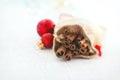 Christmas Concept - Cinnamon S...