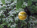 Christmas decoration ball hanging from fir tree outdoor Stock Image