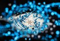 Christmas decoration with tree and blue twinkle chain on black background. Royalty Free Stock Photo