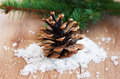 Christmas decoration cone and evergreen branch on a wooden background Stock Image