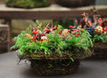 Christmas decoration with fir tree pinecones and berries of dogrose Royalty Free Stock Image