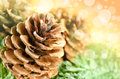 Christmas decoration of fur tree and cones as a background with nice bokeh effect Stock Photos