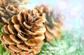 Christmas decoration of fur tree and cones with snowflakes nice bokeh snow flakes effect Stock Image