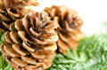 Christmas decoration of fur tree and cones on white background Royalty Free Stock Images