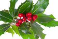 Christmas decoration with holly Royalty Free Stock Image