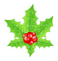 Christmas decoration holly berry branches Royalty Free Stock Photos