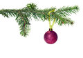 Christmas decoration tree branch with ball Stock Photo