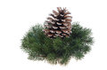 Christmas decoration wreath and fir-cone Stock Image
