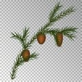 Christmas decorations with fir tree and pine cones. Vector illustration. Abstract illustration Eps10