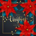 Christmas Decorations with Red Poinsettia and Christmas Lights on Dark Background Royalty Free Stock Photo