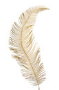 Christmas decorative golden feather isolated on white background Stock Photos