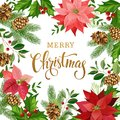 Christmas design composition of poinsettia, fir branches, cones, holly and other plants. Cover, invitation, banner, greeting card. Royalty Free Stock Photo
