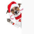Christmas dog as santa behind placard with sugar candy cane Royalty Free Stock Photos
