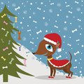 Christmas dog in costume Stock Photos