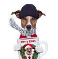 Photo : Christmas dog with cup   2