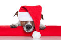Christmas dog santa baby Stock Photo