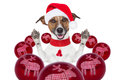 Christmas dog with santa hat and balls Royalty Free Stock Photography