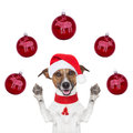 Christmas dog with santa hat and balls Stock Image