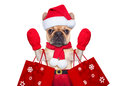 Christmas dog shopping Royalty Free Stock Photo