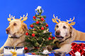 Christmas dog3 Royalty Free Stock Photo