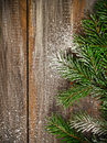 Christmas fir tree covered with snow on wooden board background Royalty Free Stock Photography