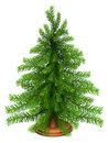 Christmas fir tree on wooden stand Royalty Free Stock Photo