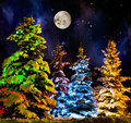Christmas firtree beautiful with resplendent multicoloured garland onn starlit night background Royalty Free Stock Photos