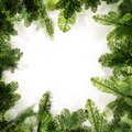 Christmas Frame. Background Border of Green Xmas Tree Royalty Free Stock Photo