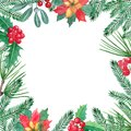 Christmas frame with green pain branches and red berries, mistletoe, holly, poinsettia