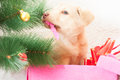 Christmas gift puppy golden sleeping in a box under the tree Royalty Free Stock Photos