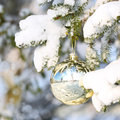 Christmas gold ball on christmas tree branch covered with snow outside winter sunny day Stock Photography
