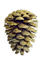 Christmas Golden Pine Cone decoration on white Stock Images