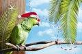 Christmas Green Parrot