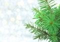 Christmas Green Tree On Shiny ...