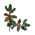 Christmas Holly Border Isolated on White Stock Image