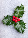 Christmas holly with red berries on silver holiday background Royalty Free Stock Photography