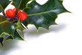 Christmas holly a sprig of on a white background Royalty Free Stock Image