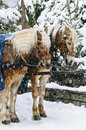 Christmas horses two in the harness under the snow Royalty Free Stock Photos