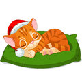 Christmas kitten sleeping cute little with santa's hat Stock Photo