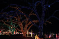 Christmas lighting on trees in a park Royalty Free Stock Photos