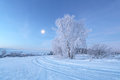 Christmas morning with moon in sky Royalty Free Stock Photo
