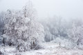The Christmas mysterious winter snowy forest in a fog, Royalty Free Stock Photo