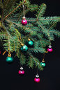 Christmas ornaments and pine branches on black background. Purple and green christmas balls on green spruce branch.Christmas balls Royalty Free Stock Photo
