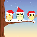 Christmas Owls Stock Image
